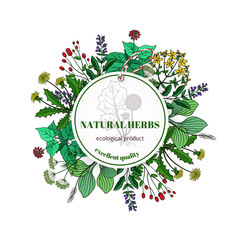 Wall Mural - Hand drawn herbs and leaves label. Vector basil thyme, rosemary mint