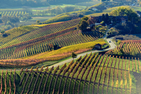 Autumn in northern italy region called langhe with colorful wine