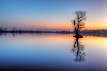 Fototapete - Tree in lake with color sky