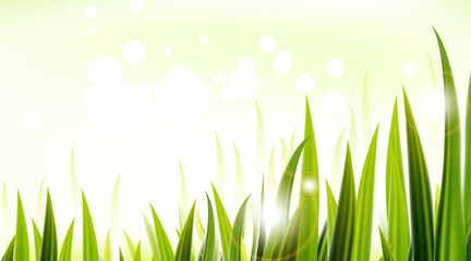 Grass over white background