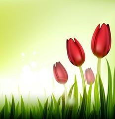 tulip spring over white background