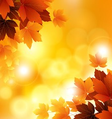 autumn flowers with orange background