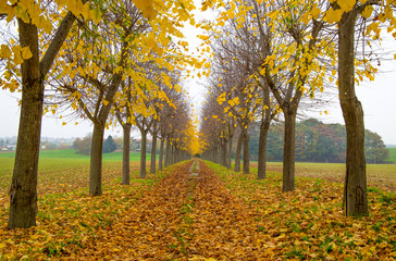 Autumn trees lined in private home road in with foliage in Italy,Europe / trees/ gate/ road / empty/ autumn
