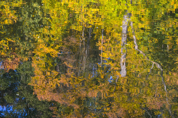 Trees reflection in water. Autumn leaves on the surface
