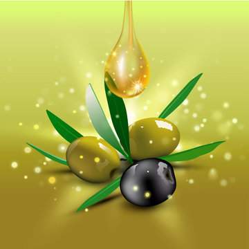 Green and black olives with leaves. Vector illustration
