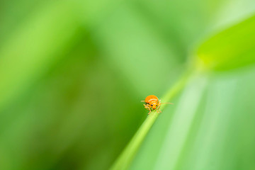 orange bug on leaf