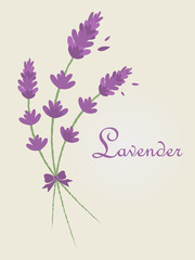 Vector Lavender Bucket with Ribbon Illustration