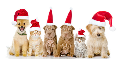 Group of cats and dogs in red christmas hats. isolated on white