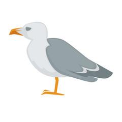 Colorful sea gull bird vector illustration.