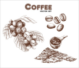 Coffee set. Coffea, coffee beans and ground coffee. Hand drawn collection in vintage style. Vector illustration
