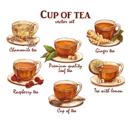 Hand drawn collection of colored cups of tea in vintage style. Vector illustration