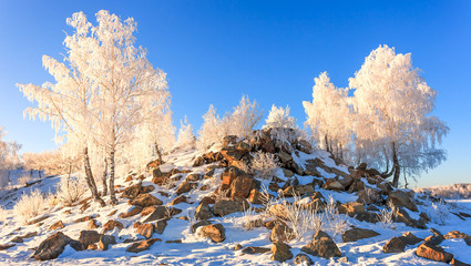 Snow covered trees on mountain
