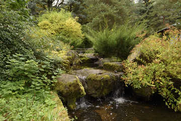 the small stream in the woody park