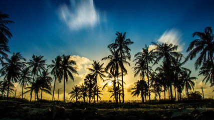 Silhouettes of a coconut tree