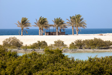 Mangroves and palm trees on Sir Bani Yas island, UAE