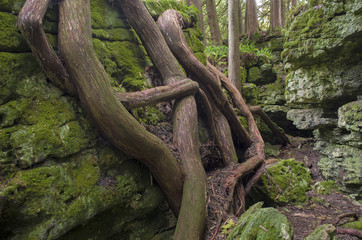 621-48 Cedar Roots and Ancient Shoreline