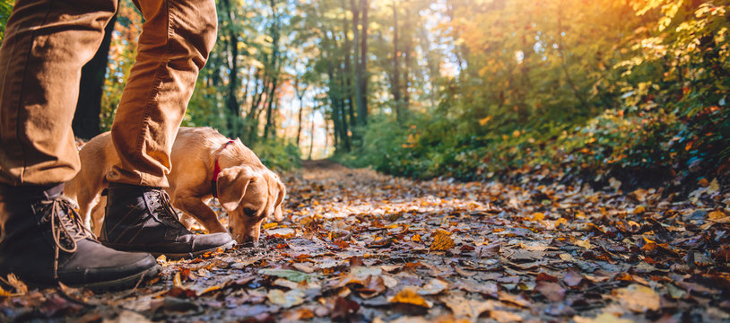 Man hiking in autumn forest with dog