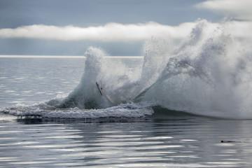 End of Humpback Whale Breach, Alaska
