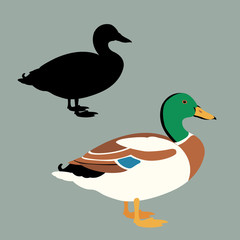 Wild duck vector illustration set style Flat