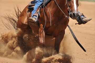 The front view of a rider on a horseback running ahead and stopping the horse in the dust.