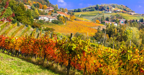 Autumn landscape . vineyards and scenic countryside of Piemonte, Italy