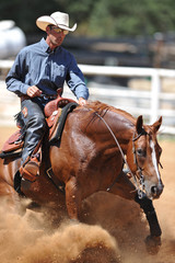 The front view of a rider in cowboy chaps, boots and hat on a horseback stopping the horse in the dust.