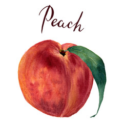 Watercolor peach with leaf and lettering Peach. Hand drawn food illustration on white background. For design, textile and background. Realistic botanical illustration.