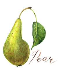 Watercolor pear with leaf. Botanical illustration. Isolated.