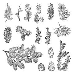 Set vector christmas branch and bumps