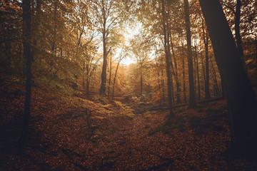 warmes Licht im Herbstwald