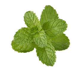 peppermint leaf isolated on white background
