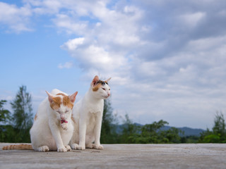 Two cat sitting on the roof and blue sky background
