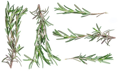 Green leaves of rosemary isolated on white background. Harvesting. Condiments and spices.