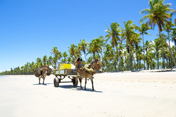 Cart with two working donkeys passing on the beach of a remote island in Nordeste, Bahia, Brazil