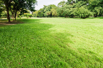public park with green grass field