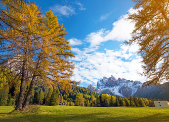 Magical autumn landscape with yellow larch on a background of mo