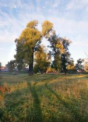 Morning Walk in Maltsevo