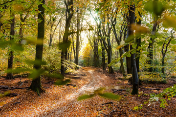 Sunflair on footpath at forest in autumn season, netherlands
