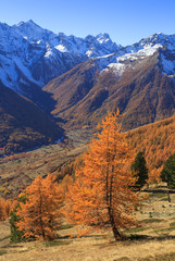 Fotomurales - Larch trees and a valley in the French Alps during a clear, autumn day.