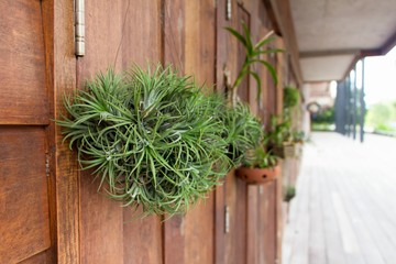 Ornamental plants hanging on the wooden wall