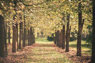 Wald, Allee und Wanderweg