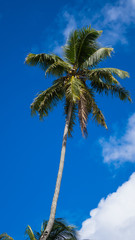 Kokospalme unter blauem Himmel