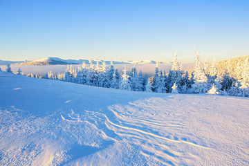 Meadow covered with snow.