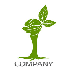 Walnut and tree logo