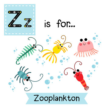 Z letter tracing. Zooplankton. Cute children zoo alphabet flash card. Funny cartoon animal. Kids abc education. Learning English vocabulary. Vector illustration.