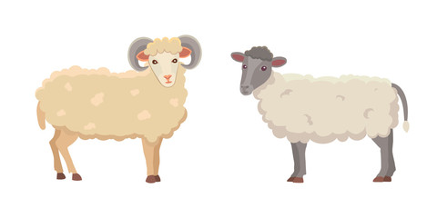 Vector set Cute Sheep and Ram isolated retro illustration. Standing Sheeps silhouette on white. Farm fanny milk young animals