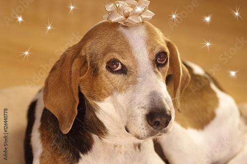 weihnachtshund hund als weihnachtsgeschenk stockfotos. Black Bedroom Furniture Sets. Home Design Ideas