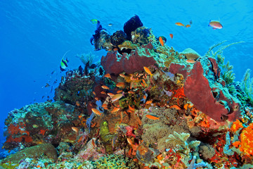 The Pristine and Colorful Coral Reefs of Komodo, Indonesia