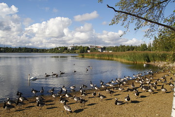 Lake in an urban park, with wildlife