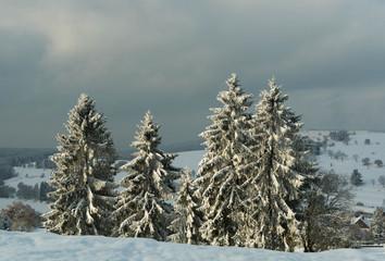 Winter - Der erste Schnee im Thüringer Wald, verschneite Tannen
